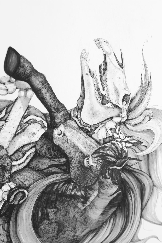 Equus Ferus Caballus (Detail Shot)