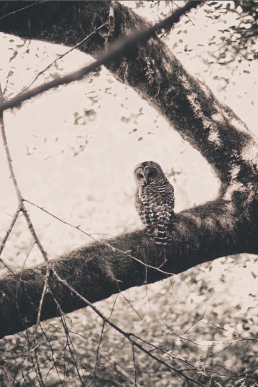 owl-18.jpg