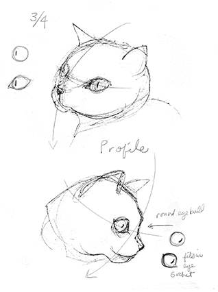 Drawing cat heads 3/4 view
