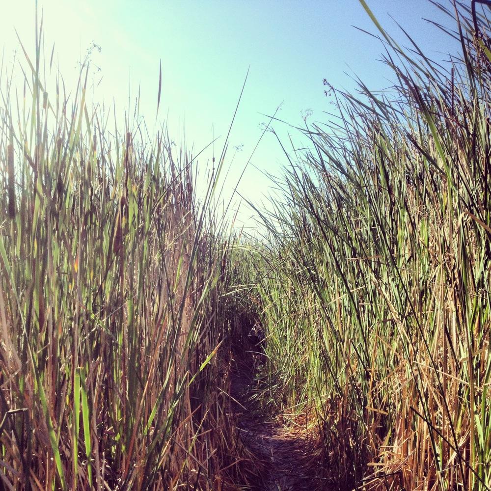 seagrass.JPG