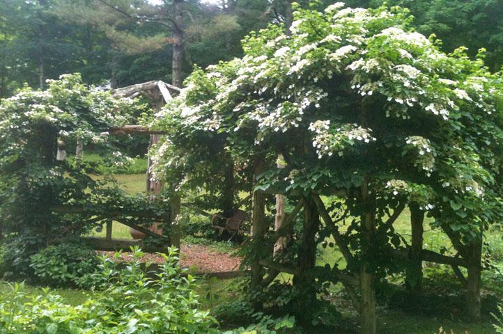 gardening12.jpg