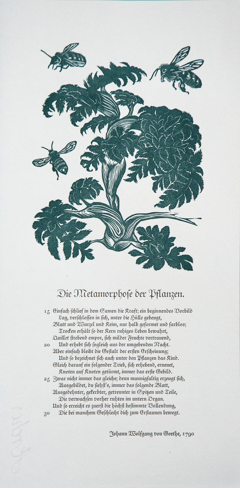 Johann Wolfgang von Goethe, Die Metamorphose der Pflanzen, 2015