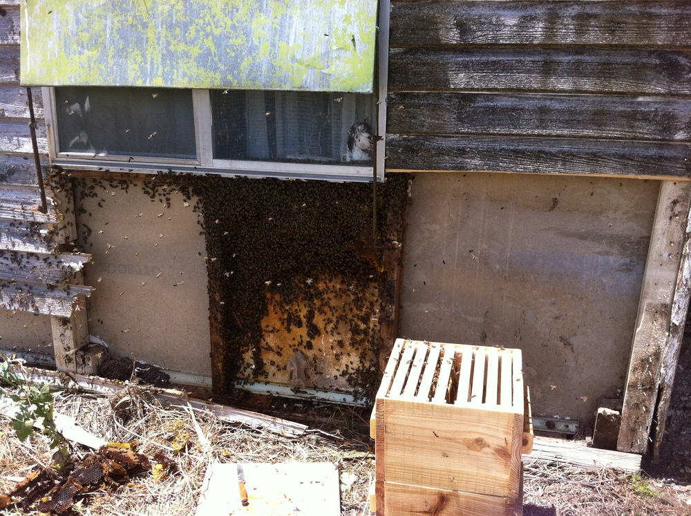 First hive under the window