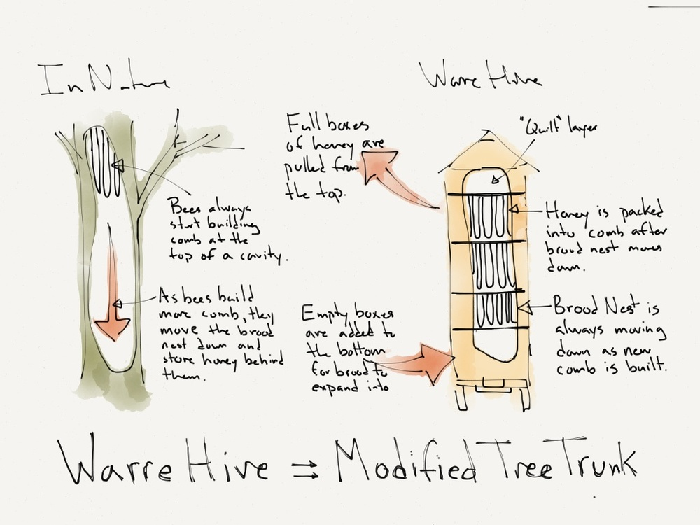 A warre hive is an endless hollow tree.