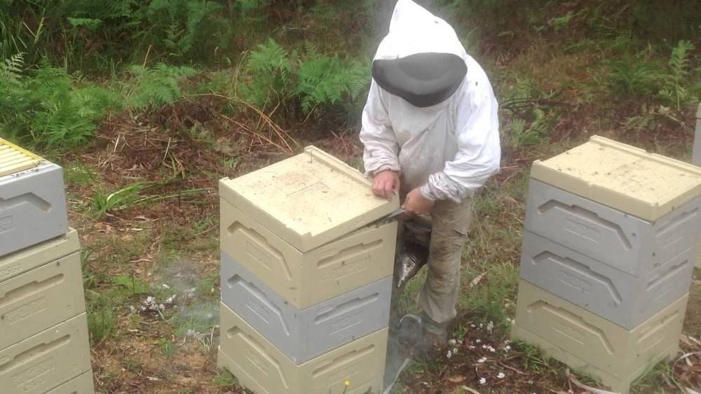 Paradise EPS hives