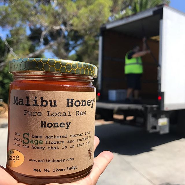 its honey pick up day, for delivery to shops and supermarkets in Los Angeles. Look out for Malibu Honey at your local shops -  #localfoods #malibuhoney #beekeeping #rawhoney #malibu #foodie #lafoodie #sweetness #wholefoodsmarket #vintagegrocers #pcgreens #farmshopla