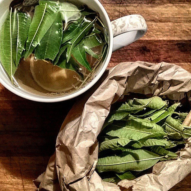 Wild foraged lemon verbena tea