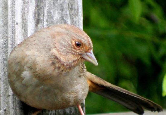 brown beautiful2web550PICK.jpg