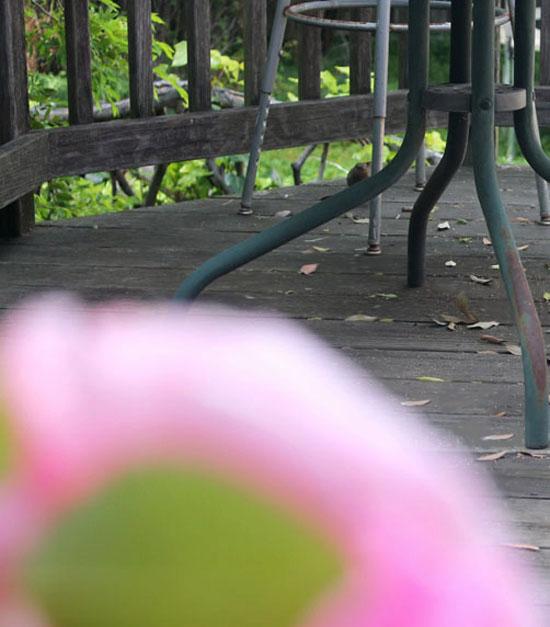 flowers6livings.jpg
