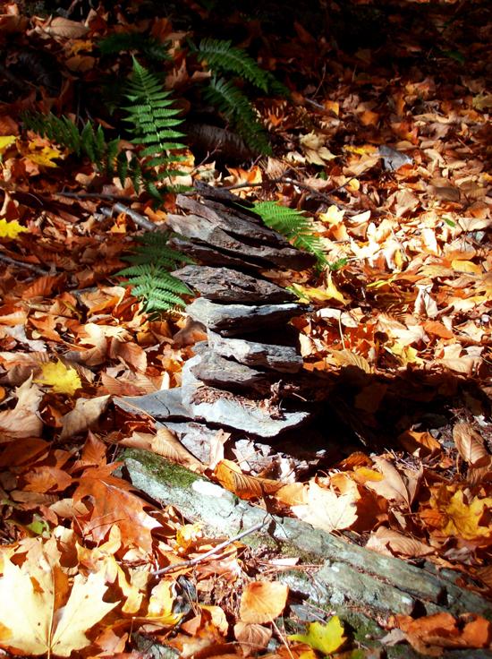Leaf Blanket Walk4.jpg