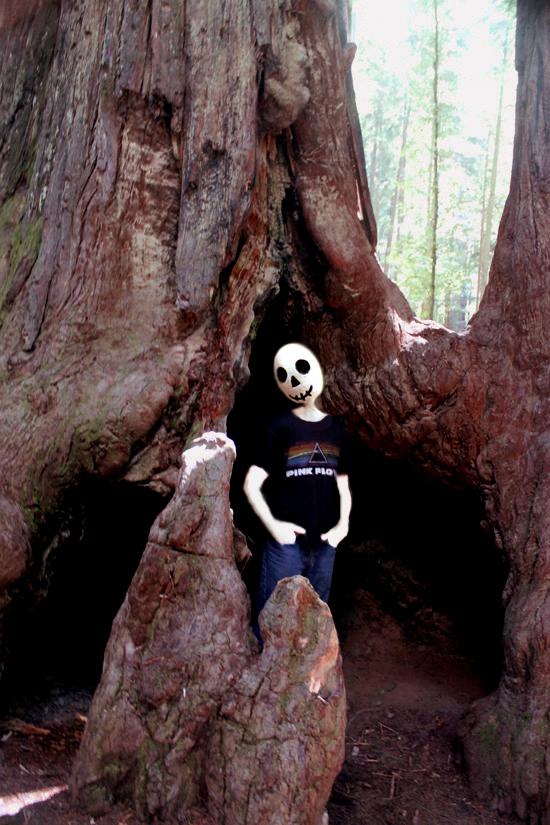 085webinredwoodslivings2.jpg
