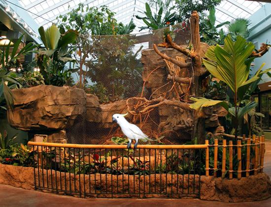 parrot aivary121LIVINGS2.jpg
