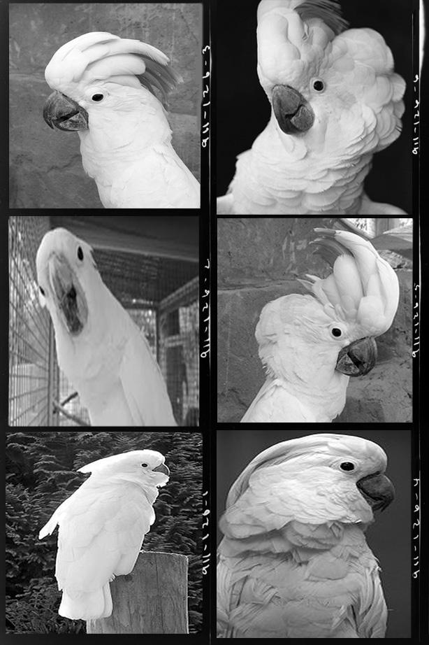 parrot contact sheet21-2LIVINGSweb2.jpg