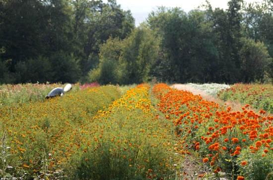 flowerfields2.jpg