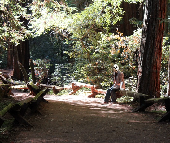 redwoods12PICK.jpg