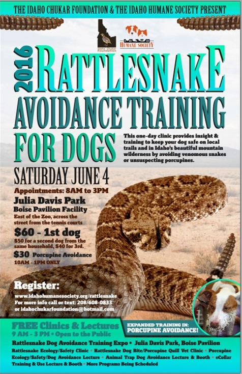 The Idaho Chukar Foundation and Idaho Humane Society offer a class each year that's designed to teach dogs to avoid the sight, sound and smell of rattlesnakes. This year, we're adding porcupine avoidance training as well.   Training sessions for 2016 will take place between 8 a.m. to 3 p.m. on Saturday, June 4, at Julia Davis Park in Boise.