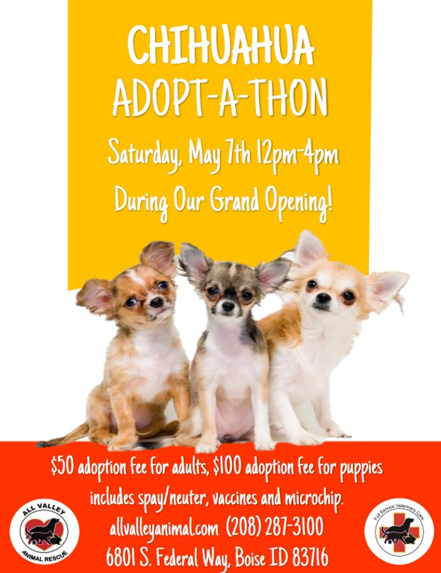 We have exciting news! We will be receiving 40 Chihuahuas from  HALO Animal Rescue  in May that will need loving, forever homes! We will be holding our annual Chihuahua Adopt-A-Thon during our Grand Opening on Federal Way on May 7th, 2016 from 12PM-4PM.  Last year, all of our adoptable chihuahuas were snatched up in less than 2 hours! So arrive promptly at 12PM!  We will NOT be adopting out any chihuahuas until the event at 12PM to give a fair opportunity to everyone that is looking to meet a forever friend. For more information, please call our All Valley Animal Rescue at (208) 287-3100 or email us at Rescue@allvalleyanimal.com See you there!