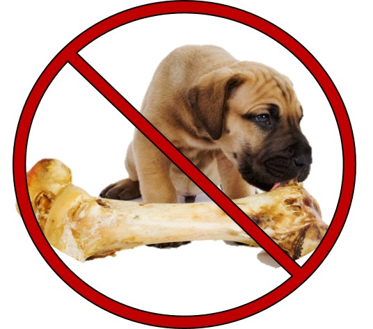 Keep the Leftovers to a Minimum. If you're having a BBQ this Memorial Day weekend, try to keep the leftovers to a minimum. Foods like onions, garlic, coffee, avocado, and grapes are all hazards for your pet. Bones from meat, cooked and raw bones, are also very risky! Signs that your pet may have ingested something he or she should not have include vomiting, diarrhea, seizures, bloody stool, lethargy, and loss of appetite.