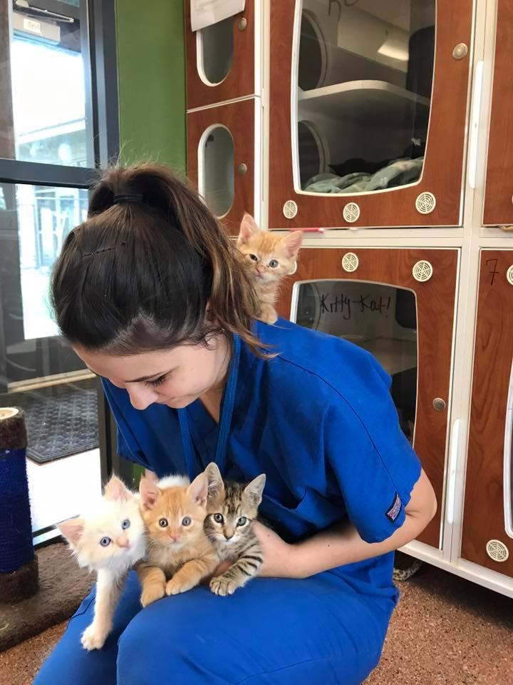 Maisen Kittens.jpg