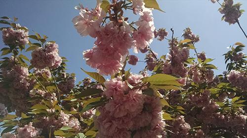 springtime changes.jpg