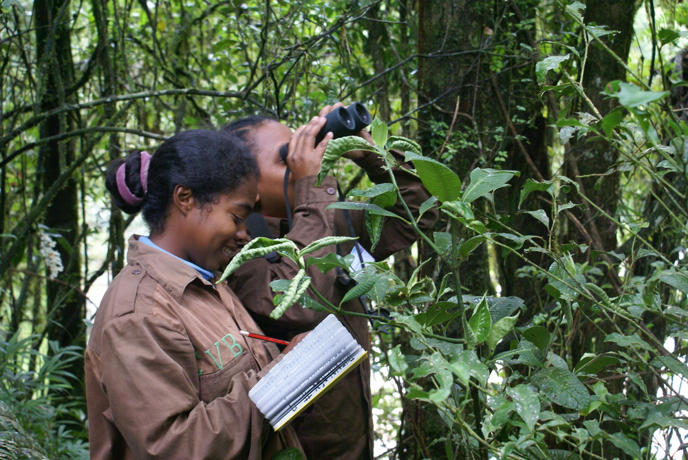 Centre ValBio Research Technicians recording behavior of an animal in Ranomafana National Park.