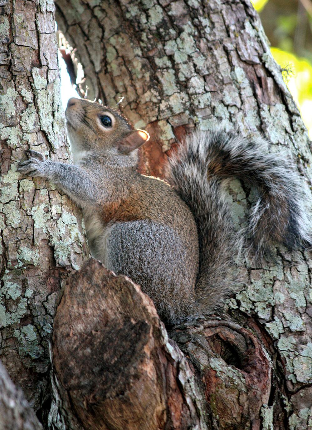 Tree Hugger - 021/365