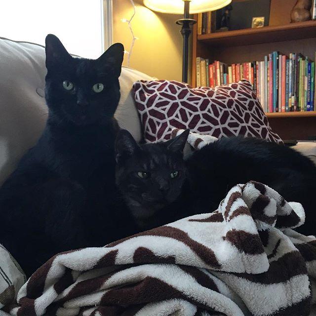 Cozy lil bro-skis 👿😍😈 #blacksmoketabby #blackcatclub #blackcatsofinstagram #gemgirlcats