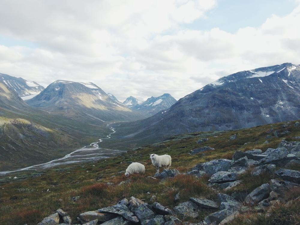 Landscape Atle 1.jpg