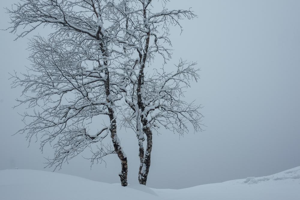 Mørkgonga-24.jpg