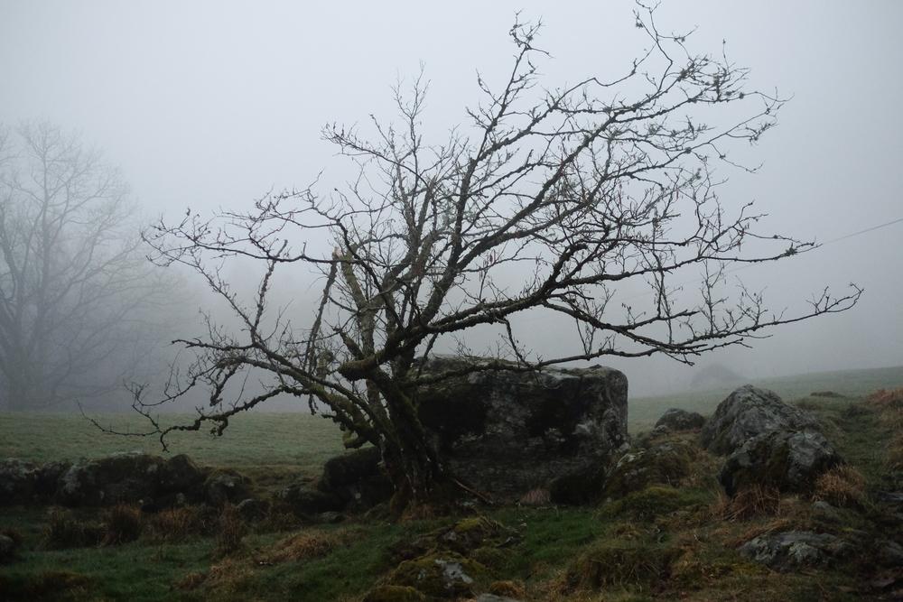 Fog - Original-1.jpg