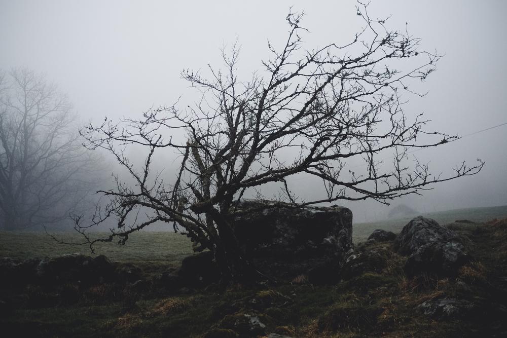 Fog - Mystic III-1.jpg