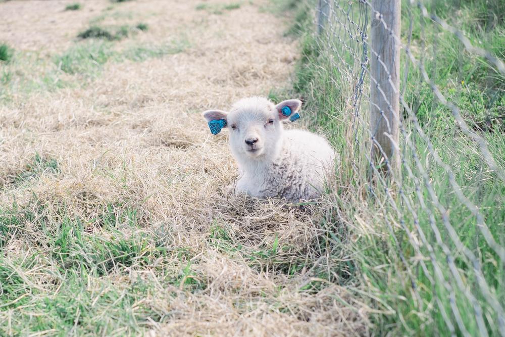 Lamb - Innocence I-1.jpg