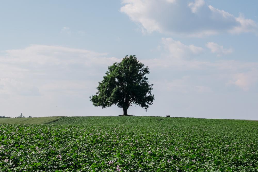 Tree wide - Amethyst III-1.jpg