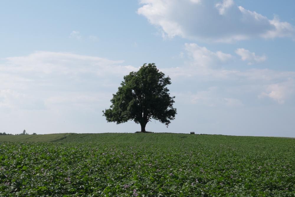 Tree wide - SOOC-1.jpg
