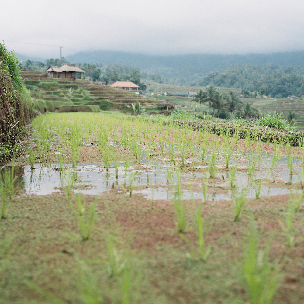 Bali-film-70.jpg