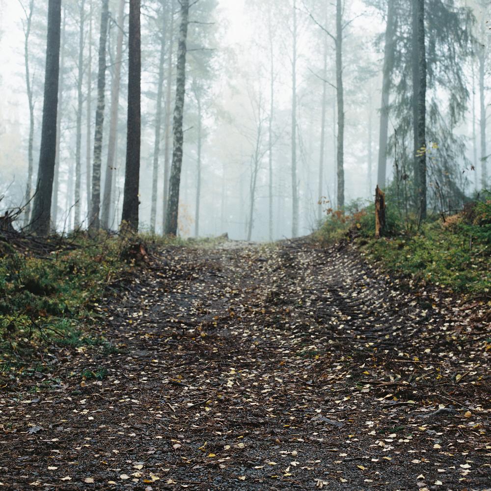 Songsvann-fog-18.jpg