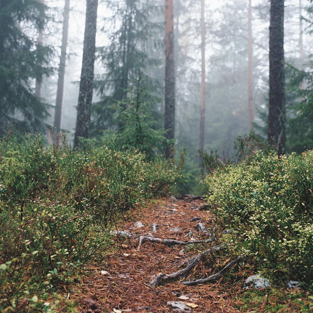 Songsvann-fog-19.jpg