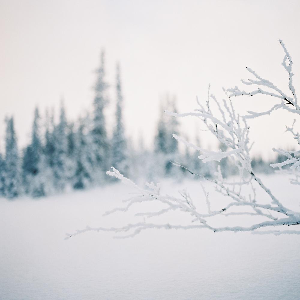Tuddal-vinter-RPL-Portra160-5.jpg