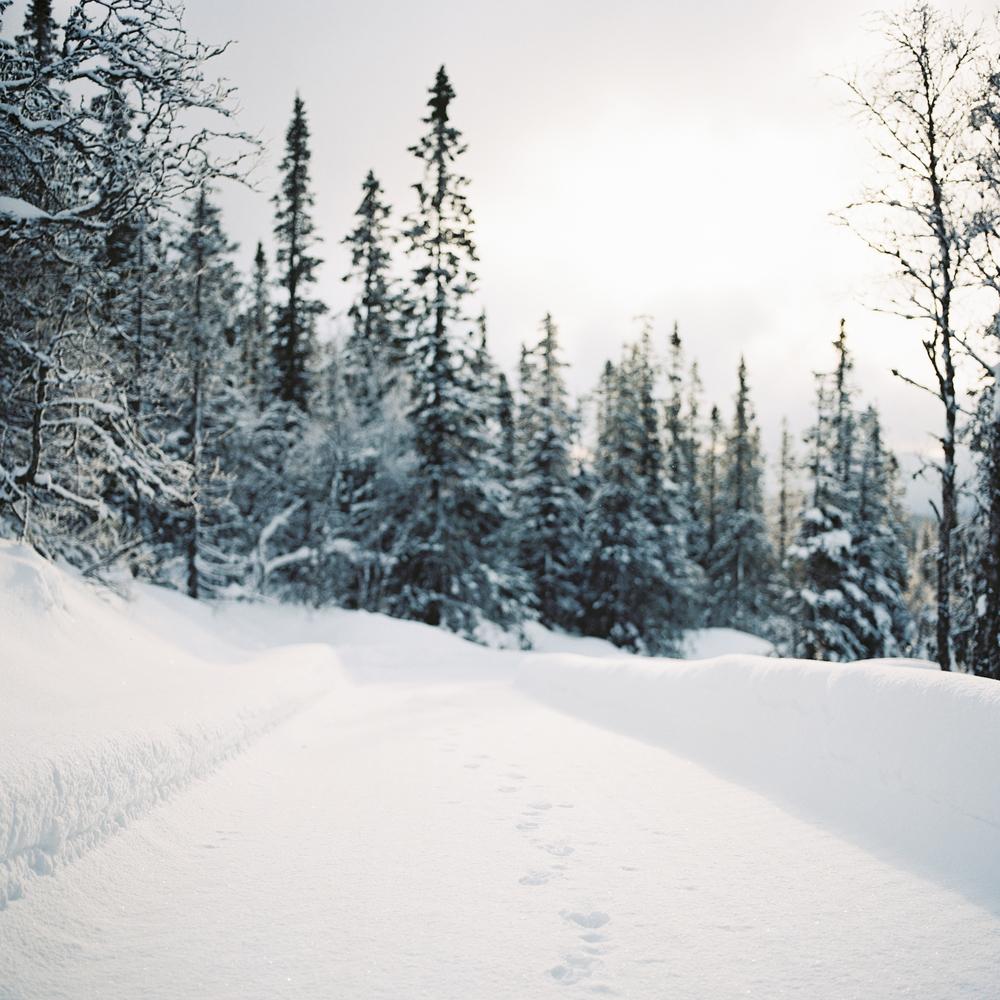Tuddal-vinter-RPL-Portra160-3.jpg