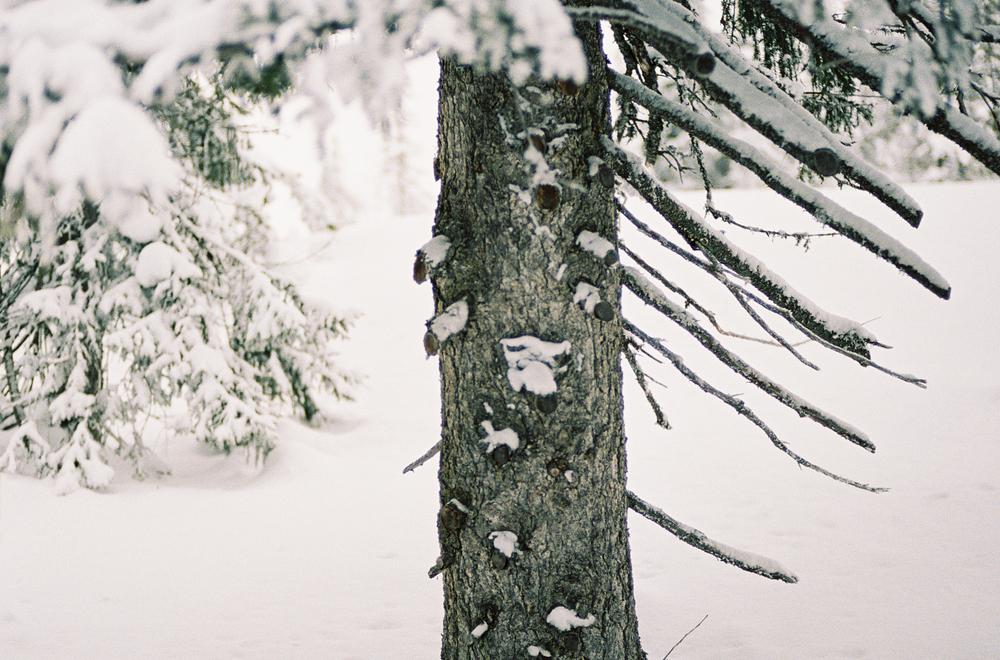 Tuddal-vinter-RPL-Portra400-4.jpg