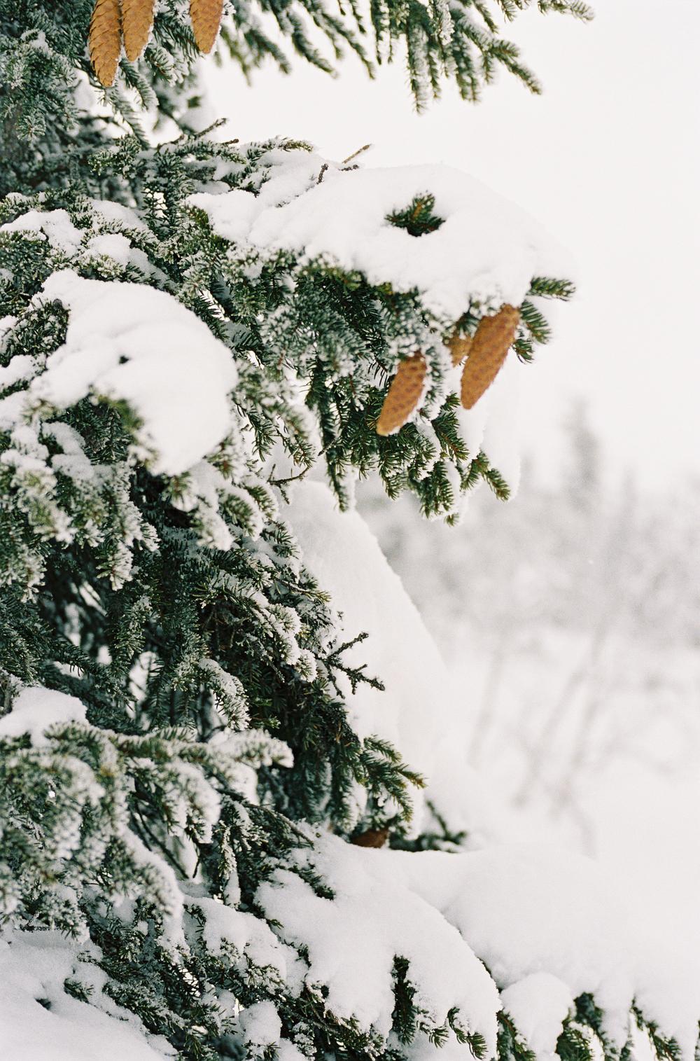 Tuddal-vinter-RPL-Portra400-11.jpg
