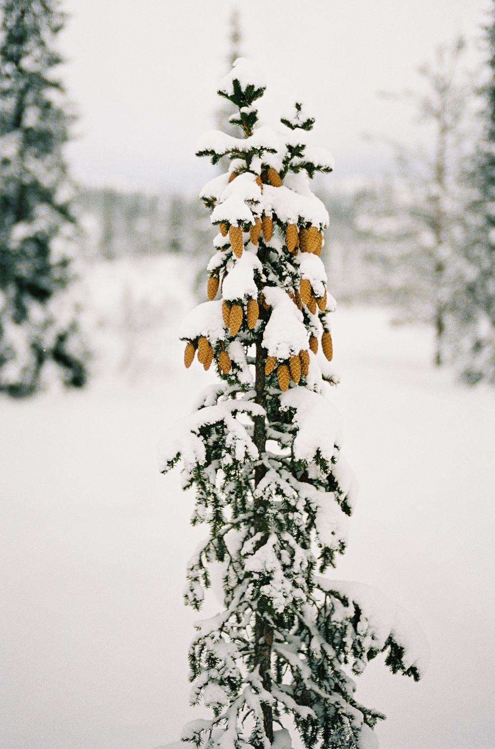 Tuddal-vinter-RPL-Portra400-12.jpg