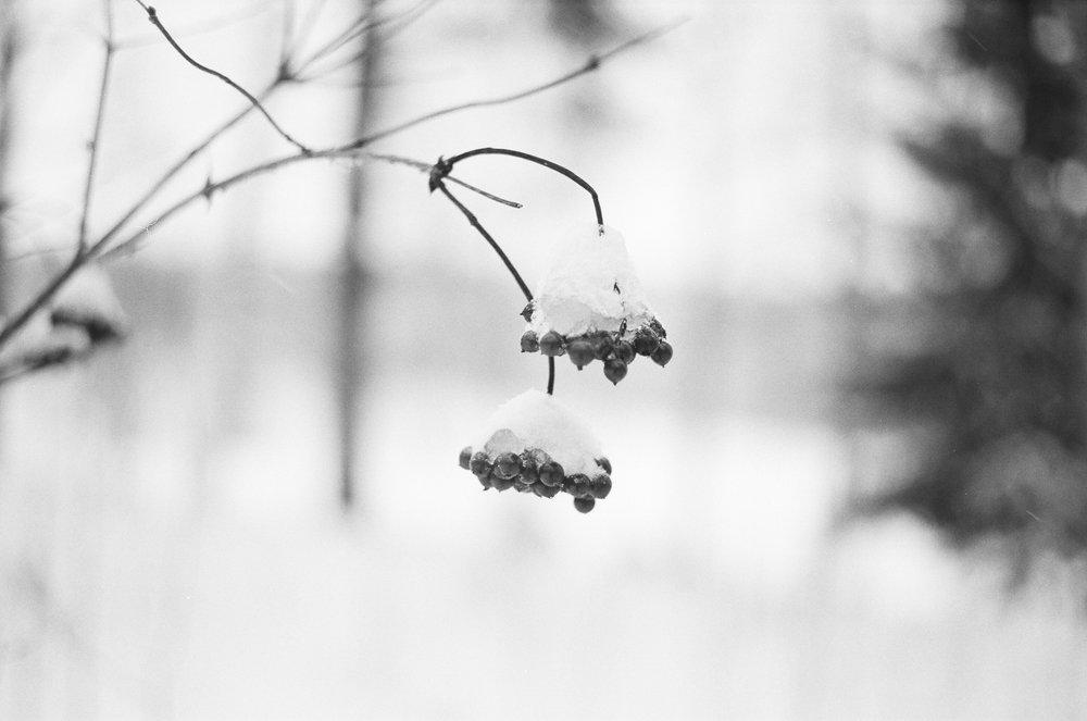 Songsvann-vinter-9.jpg
