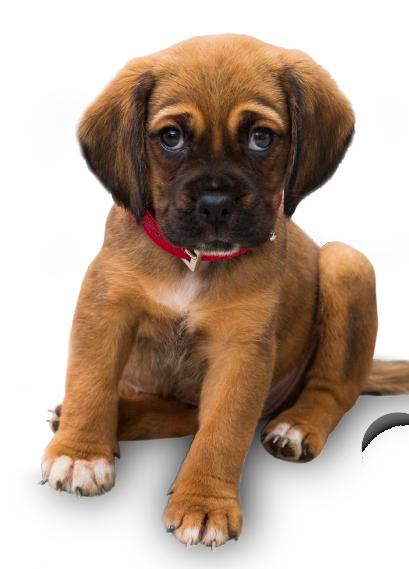 petsbest_puppy