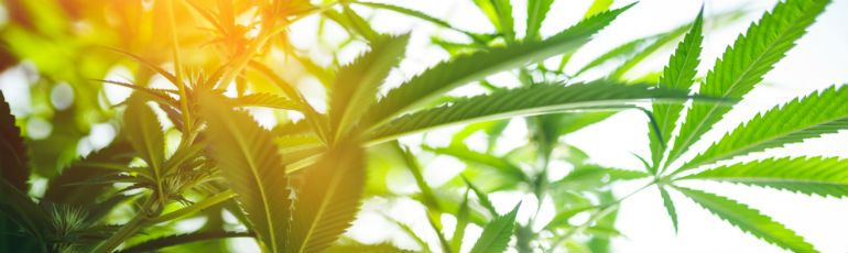 marijuana-law.jpg