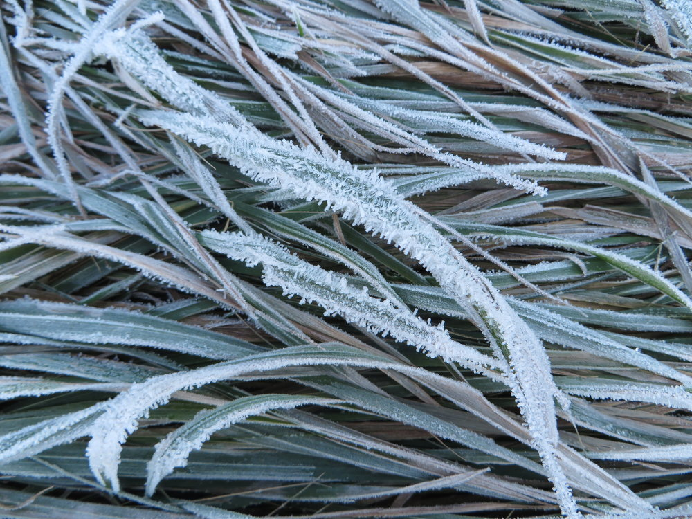 Frost in the Meadow