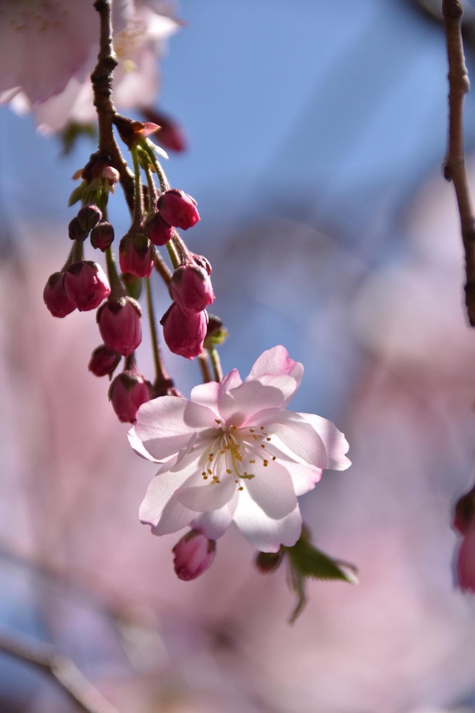 A Wink at Spring