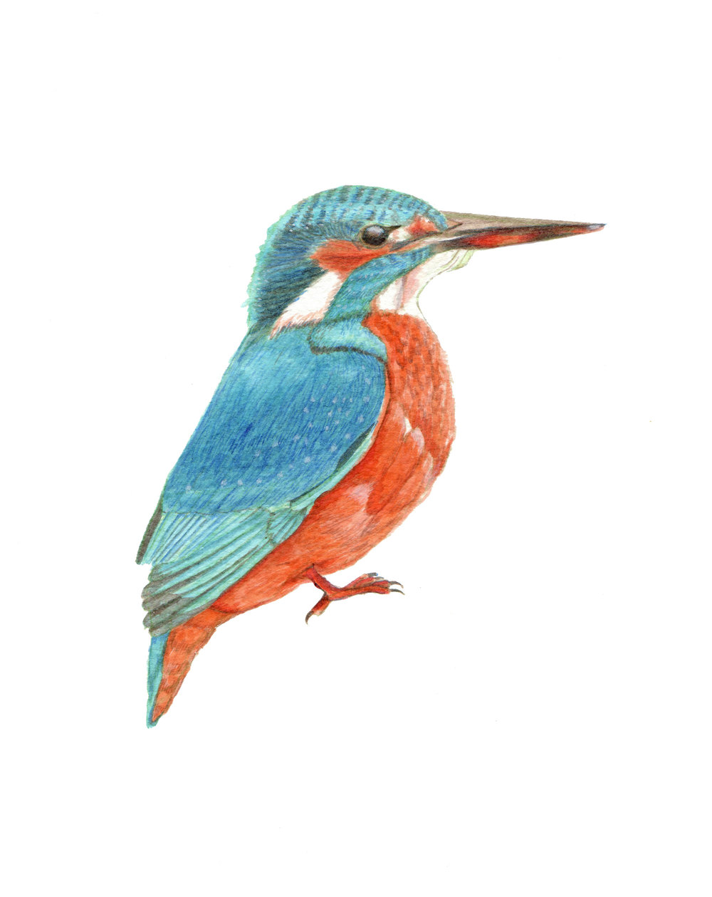 Kingfisher_web.jpg