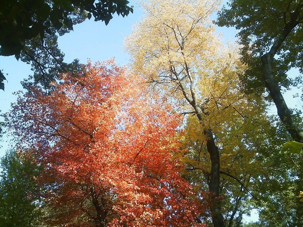 LauraNg_FallFoliage