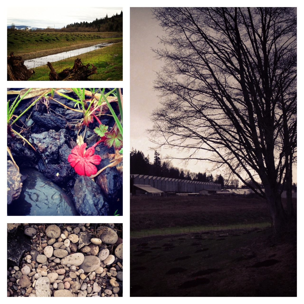 site visit: springfield oregon